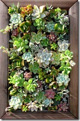 succulent_wall_panel