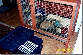 Cornelius New Cage and Worm farm