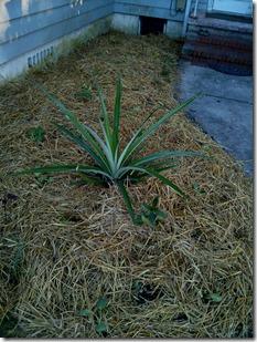 10.21.14  Garden Planted